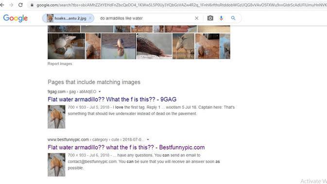 Hasil penelusuran google image hoaks burung hantu.