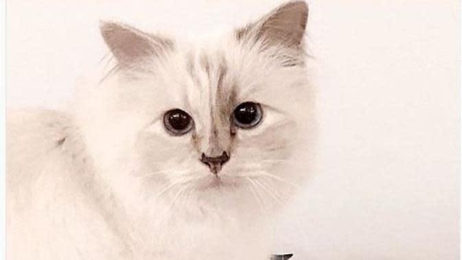Choupette, kucing kesayangan Karl Lagerfeld . (dok.Instagram @choupettesdiary/https://www.instagram.com/p/BtIA-cAlwH9/Henry)