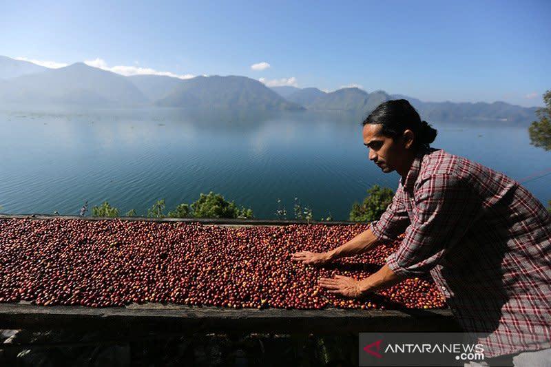 Permintaan merosot, ekspor kopi Gayo anjlok hingga 70 persen