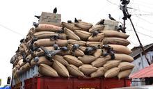 印度男誤訂一卡車的米 驚人結局曝光網友笑翻
