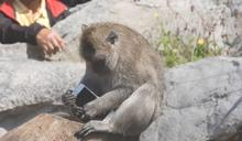 工讀生快出來! 動物園馬來猴玩iPhone手機