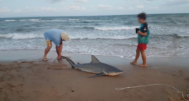 Shark sighting in Queensland: The image shows the fisherman with the shark on Margate beach.