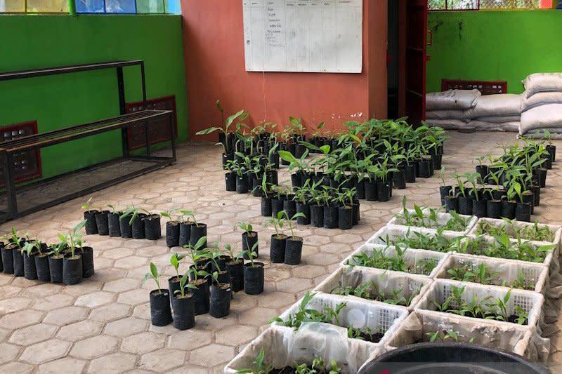 Minat berkebun naik, Kebun Plasma di Yogyakarta buka Sabtu-Minggu