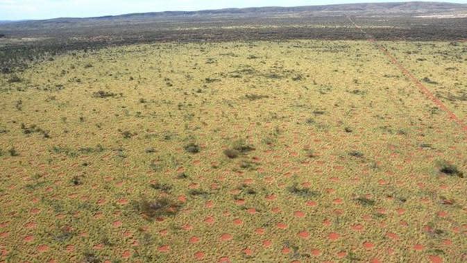 Dilihat dari udara, crop circle di pedalaman Australia ini lebih mirip TTS alias Teka Teki Silang.