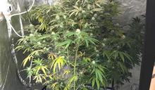 紐西蘭遊學曾吸大麻 花錢網購種子培育解癮栽了