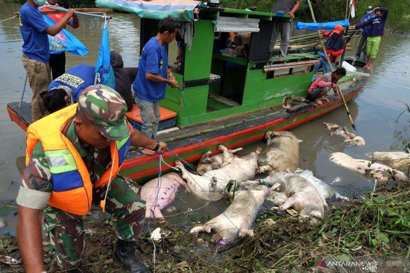Kasus ASF, Kementan tingkatkan pengawasan lalu lintas produk babi