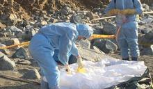 中國豬隻屍體海漂金門 檢出非洲豬瘟病毒核酸陽性