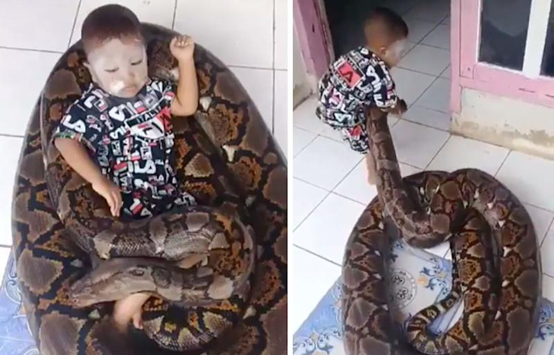 Toddler on giant python in Indonesia caught on video