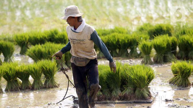 Petani menanam padi di sawah kawasan Tangerang, Banten, Jumat (7/8/2020). Badan Pusat Statistik (BPS) merilis PDB sektor pertanian menjadi penyumbang tertinggi terhadap pertumbuhan ekonomi nasional pada triwulan II 2020. (Liputan6.com/Angga Yuniar)