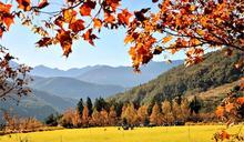 武陵農場繽紛多彩11月 宛如上帝遺落人間調色盤
