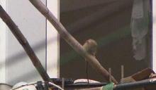 拾荒老翁養寵物!超過100隻 社區居民崩潰控:他養老鼠啊…