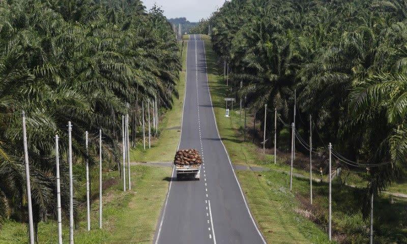 Sabah Malaysia tutup perkebunan kelapa sawit akibat wabah corona