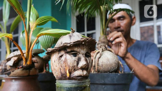 Bonsai batok kelapa yang dibentuk kepala manusia oleh pengrajin tanaman, Herman Ronda di Jalan Salak, Pamulang, Tangerang Selatan, Senin (13/10/2020). Perawatan bonsai batok kelapa sangatlah mudah, hanya disiram dengan air garam dan ditempatkan pada suhu yang lembab. (Liputan6.com/Fery Pradolo)