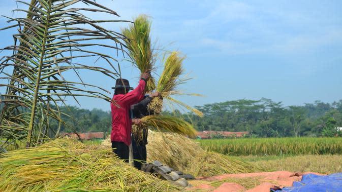 BRI Ikut Berdayakan Petani Indonesia Lewat TaniGroup