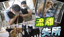 東北發展掀棄養潮 2000貓狗恐丟街頭 政府袖手
