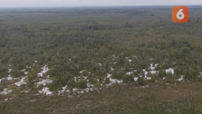 Dari udara, penampakan hutan anggrek menjadi lebih menarik karena tumbuh di antara pasir putih.