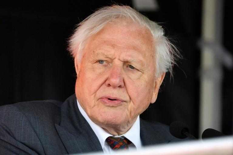 Attenborough is renowned for his ground-breaking wildlife programmes for the BBC