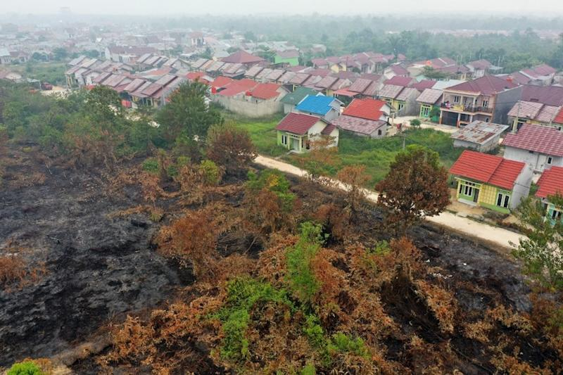 This aerial picture shows smouldering peatland (left) after a fire swept through the area and stopped moving further due to a road in Kampar, Riau province September 13, 2019. — AFP pic