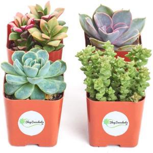 Collection-of-Live-Succulent-Plants