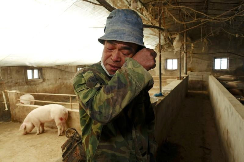 Disease that killed millions of China's pigs poses global threat