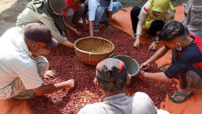 Kelompok tani yang mengembangkan kopi organik.