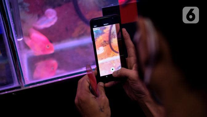 Seorang pengunjung mengambil foto ikan Louhan saat kontes ikan di Mal Tangcity, Kota Tangerang, Kamis (24/9/2020). Sebanyak 300 ikan Louhan berbagai ukuran dari Jabodetabek, Surabaya, Bandung, Sumetera, Kalimantan diikutsertakan dalam kontes tersebut. (Liputan6.com/Angga Yuniar)
