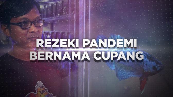 VIDEO BERANI BERUBAH: Rezeki Pandemi Bernama Cupang