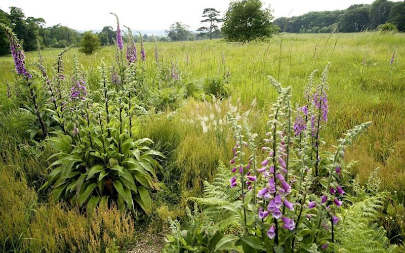 Grasslands have a vital role in attracting plant and insect diversity - PA