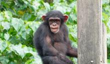 「猿」與「猴」分不清?4撇步變達人