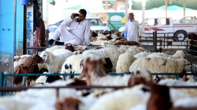 Pedagang menunggu pembeli hewan kurban menjelang Idul Adha di sebuah pasar ternak di Kuwait pada 5 Agustus 2019. Umat Islam di seluruh dunia akan merayakan Idul Adha yang identik dengan tradisi berkurban dengan hewan seperti kambing, domba, unta, sapi dan kerbau. (Yasser Al-Zayyat/AFP)