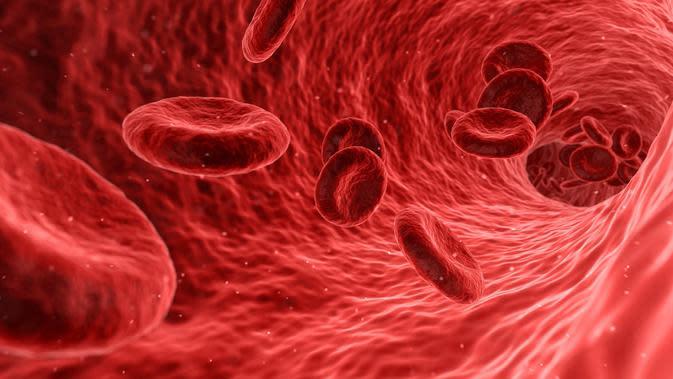 pembuluh darah (Sumber: Pixabay)
