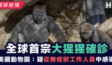 【環球疫情】全球首宗大猩猩確診 美國動物園:疑從工作人員中感染
