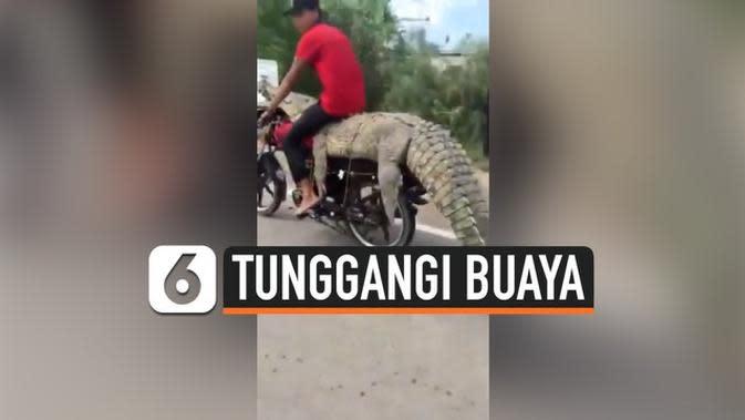 VIDEO: Heboh, Aksi Pria Tunggangi Buaya di Motornya