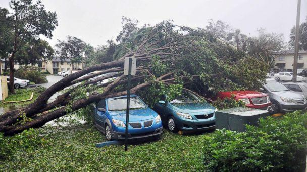 PHOTO: A fallen tree lies atop a row of cars on Sept. 10, 2017 Miami, in the wake of Hurricane Irma. (Michele Eve Sandberg/AFP/Getty Images)