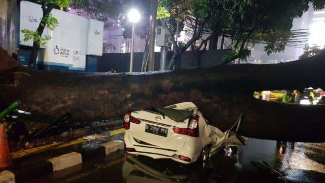 Jakarta Diguyur Hujan, Pohon Besar Tumbang Timpa Mobil hingga Ringsek