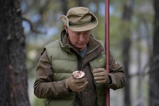 Putin beäugt fachmännisch einen gefundenen Pilz (Bild: Sputnik/Alexei Druzhinin/Kreml via Reuters)