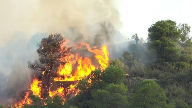 Ilustrasi kebakaran hutan (AFP Photo)