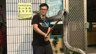 【錯誤】網傳「台南日前捕獲到一條巨大的金剛眼鏡蛇...在泰安跟新北山區都有抓到,懷疑是宗教放生的...台灣並沒有金剛眼鏡蛇的血清,所以咬到必死無疑」?