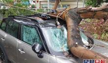 沙田露天停車場塌樹 壓中私家車頂擋風玻璃爆裂