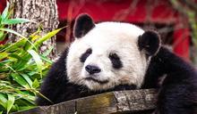 情不自禁或逼不得已!15大總是熬夜當熊貓的理由