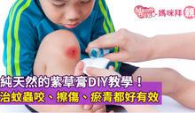純天然的紫草膏DIY教學!治蚊蟲咬、擦傷、瘀青都好有效