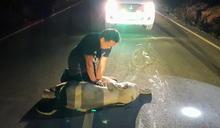 【本周暖心聞精選】泰國小象被撞昏迷暖男CPR救回一命「感動到快哭了」