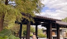 被落雨松包圍的日式涼亭!秋季絕美秘境就在台北市區