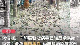 【錯誤】網傳照片「印度新冠病毒已經感染到鳥類」?