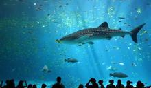 跟真的一模一樣!好萊塢特效團隊打造會表演的「機械海豚」 水族館虐待動物爭議有解?