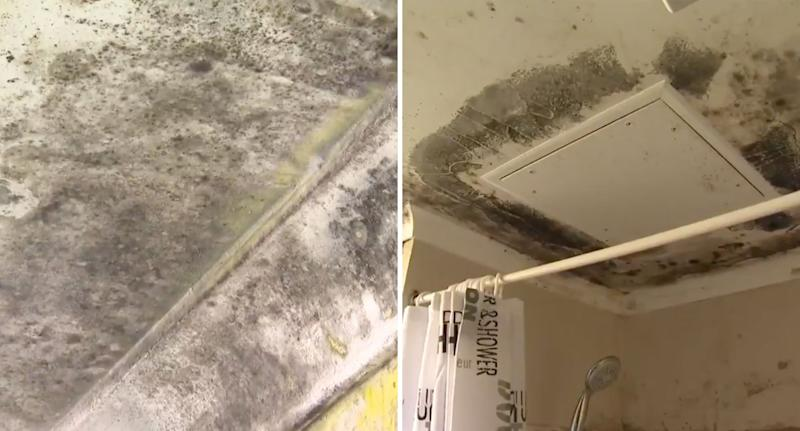 Sydney government housing unit shown with mould covering the bathroom ceiling.