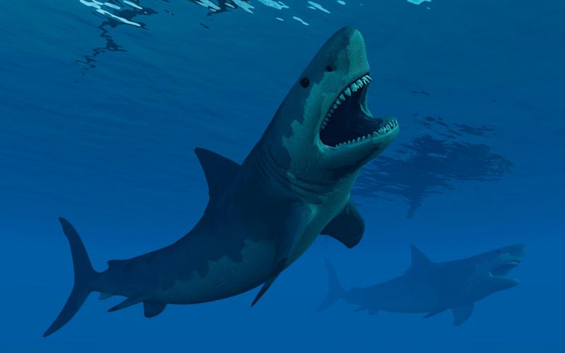 An artist's impression of what a giant megalodon shark would have looked like - Stocktrek Images