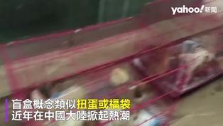 陸電商賣「寵物盲盒」貓狗活體打包塞貨車「玩命快遞」官媒痛批