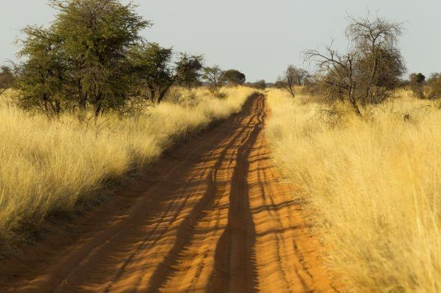 Worried and wary: S.Africa's safari industry waits out virus pandemic