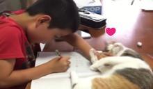 三花貓「化身毛毛蟲」干擾小主人寫功課 扭來扭去:跟我玩!
